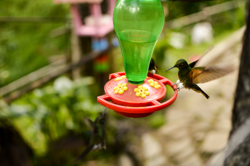 cocorahummingbirds