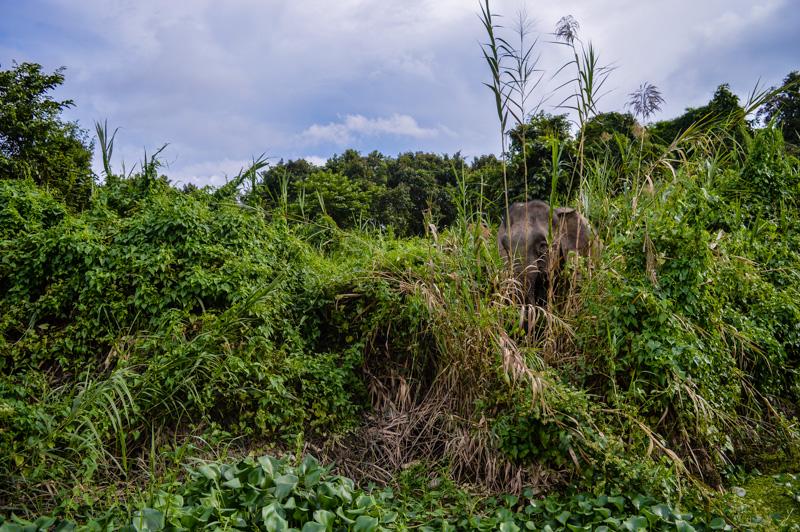 kinabatnaganelephant