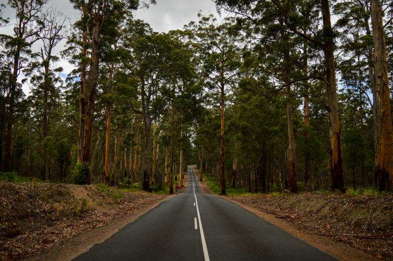 margaretriverroadforest