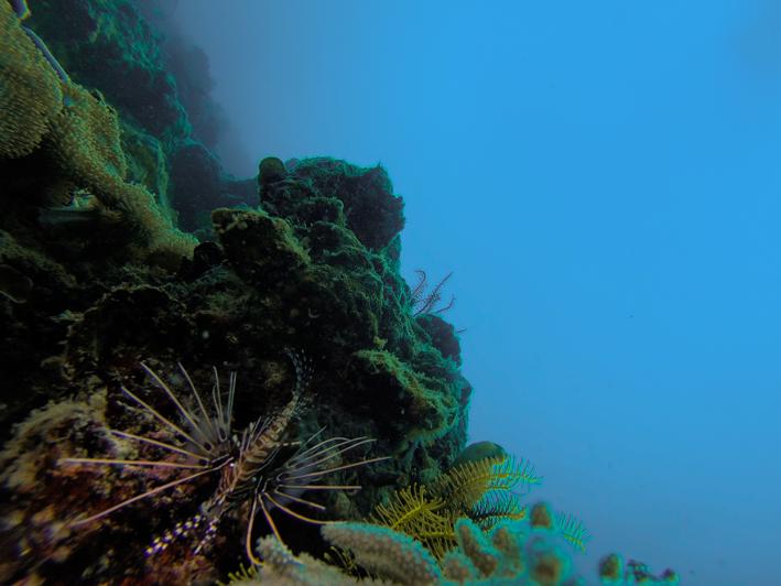 sipadanlionfish